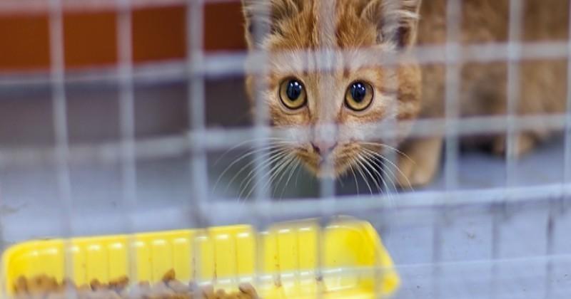 5 bonnes raisons d adopter un chat de refuge choisir son chat wamiz. Black Bedroom Furniture Sets. Home Design Ideas
