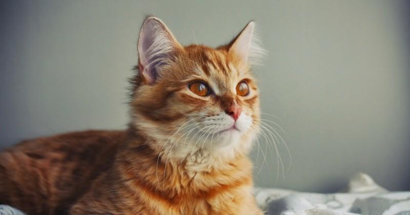 Griffes de chat comment viter les d g ts entretenir son chat wamiz - Quand peut on couper les griffes d un chaton ...