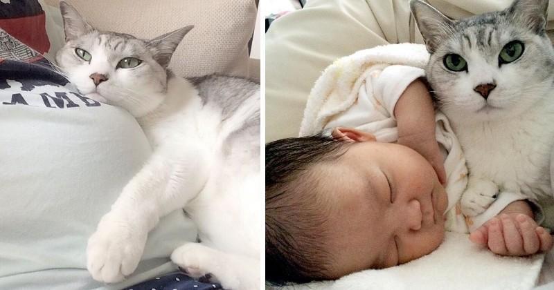 Âgée de 15 ans, cette chatte aime le bébé de son humaine comme si c'était le sien !