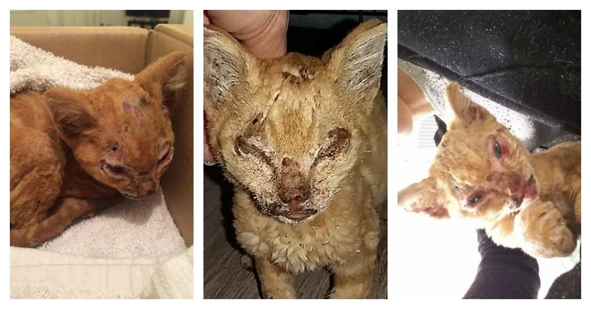 un chaton tortur tente de survivre dans le nord de la. Black Bedroom Furniture Sets. Home Design Ideas