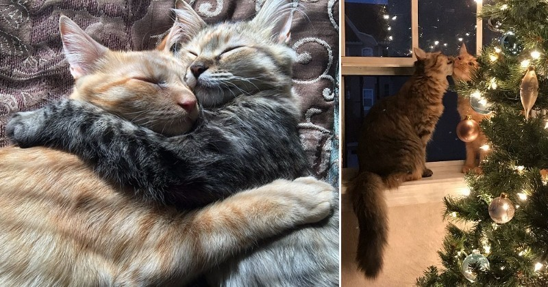 Amoureux, ces deux chats font fondre Internet