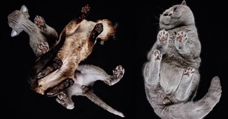 Under-Cats : la série de photos qui va vous faire découvrir les mystérieux dessous… des chats !