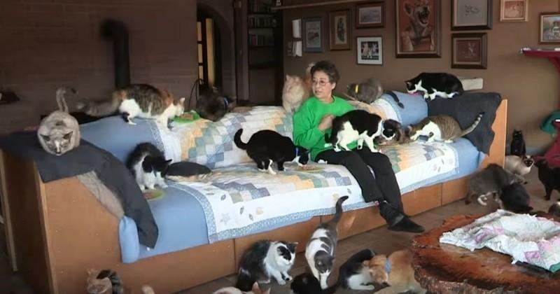une californienne l gue sa grande maison 1100 chats. Black Bedroom Furniture Sets. Home Design Ideas