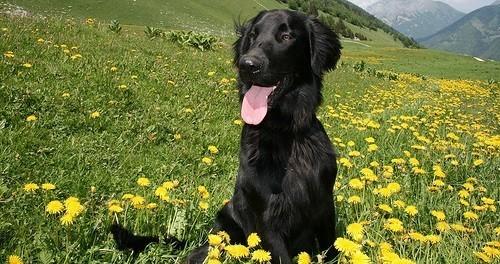 en vacances avec mon animal zoom sur la haute savoie voyager et jouer avec son chien wamiz. Black Bedroom Furniture Sets. Home Design Ideas