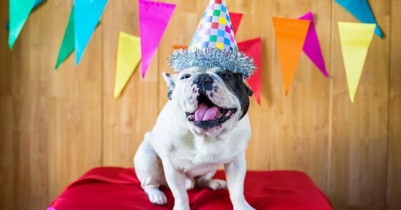 anniversaire du chien