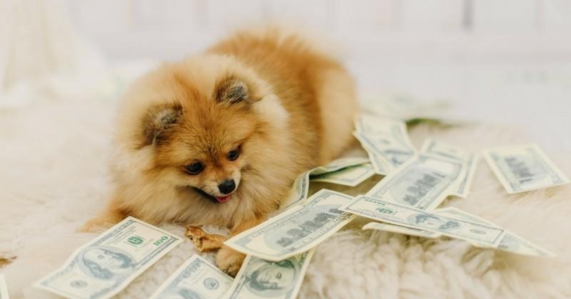 L amour d un chien a n a pas prix mais a a un co t 3 for Cout d un chien assis