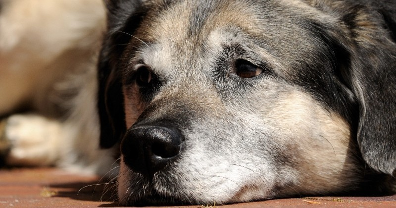 Les précautions à prendre pour lutter contre l'arthrose canine !