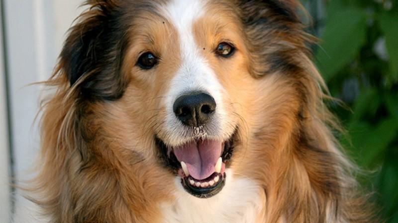 Mon chien est le meilleur la nouvelle mission de tf1 for Interieur de la bouche blanche