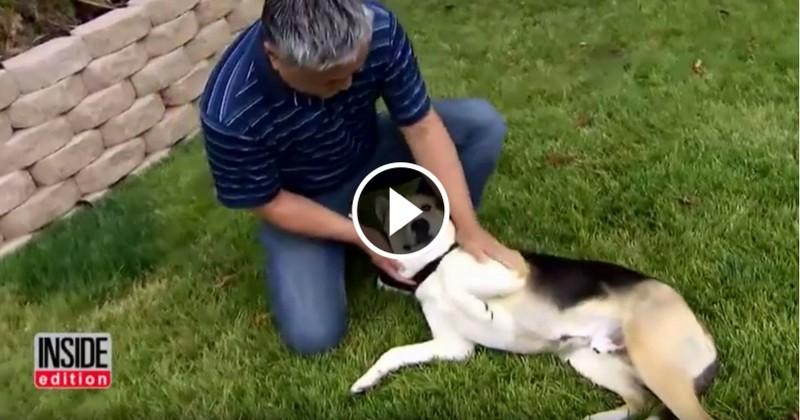 Ce chien fait fuir un ours… de sa piscine ! - Vidéos - Wamiz
