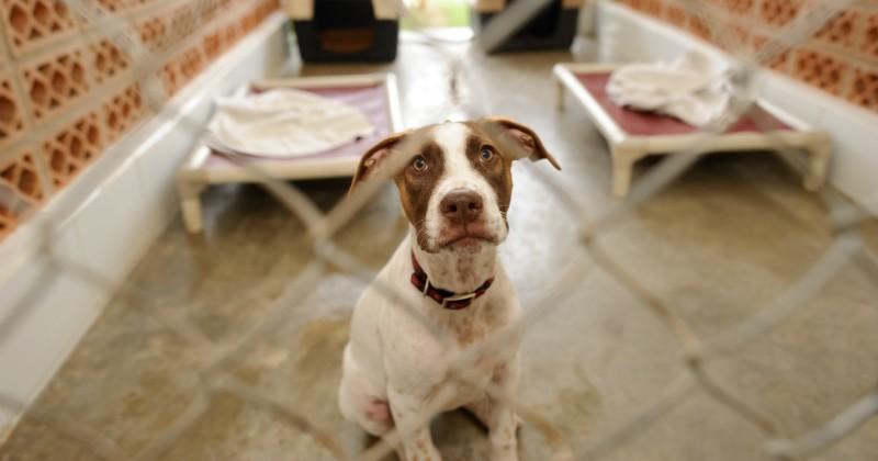 comment adopter un animal la spa choisir son chien wamiz. Black Bedroom Furniture Sets. Home Design Ideas