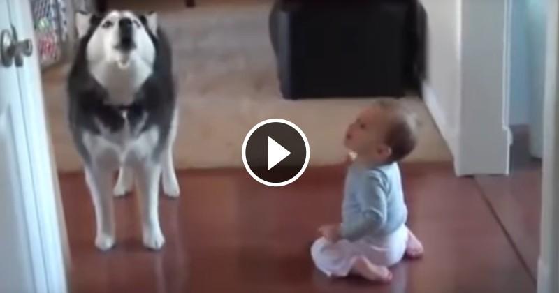 L'incroyable conversation de ce chien avec un bébé va vous faire craquer ! (Vidéo du jour)