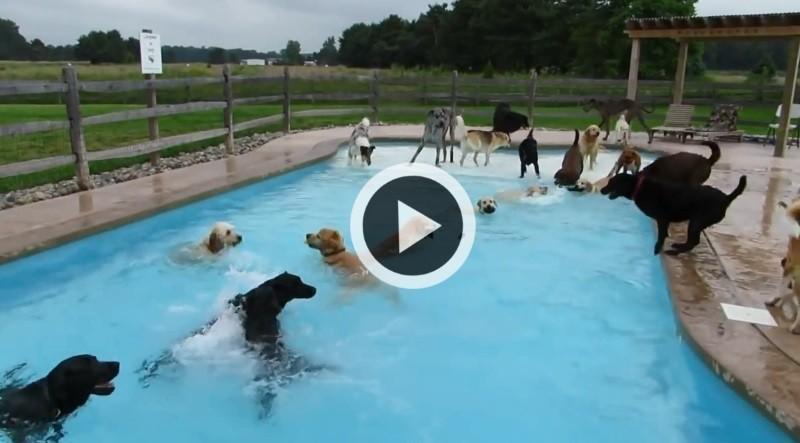 Des chiens une piscine un grand moment de bonheur vid o for Animaux gonflable piscine
