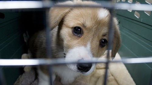 160 animaux saisis dans 7 animaleries parisiennes cause - Animalerie a paris chien ...