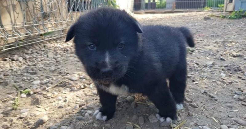 Ils trouvent un chien abandonné, la propriétaire débarque au refuge : ce qu'elle dit est inadmissible