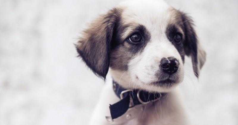 Solution Anti Aboiement - 10 astuces à savoir - Education du chien - Blog chien