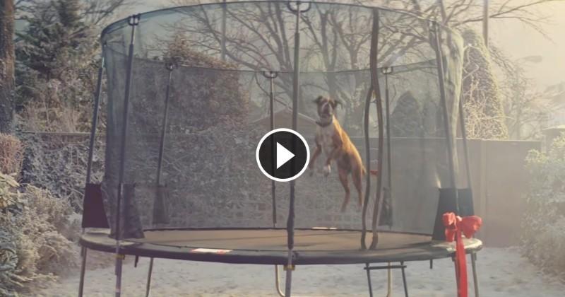 Une publicité de Noël fait bondir de joie chaque chien qui la regarde (Vidéo du jour)