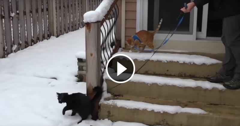 Les chats Cole et Marmalade découvrent la neige… et ils vont vous faire rire ! (Vidéo du jour)