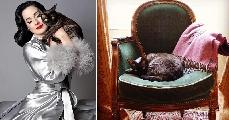 10 preuves qu'Aleister Von Teese, le chat «chouette-souris» des réseaux sociaux, est plus cool que vous