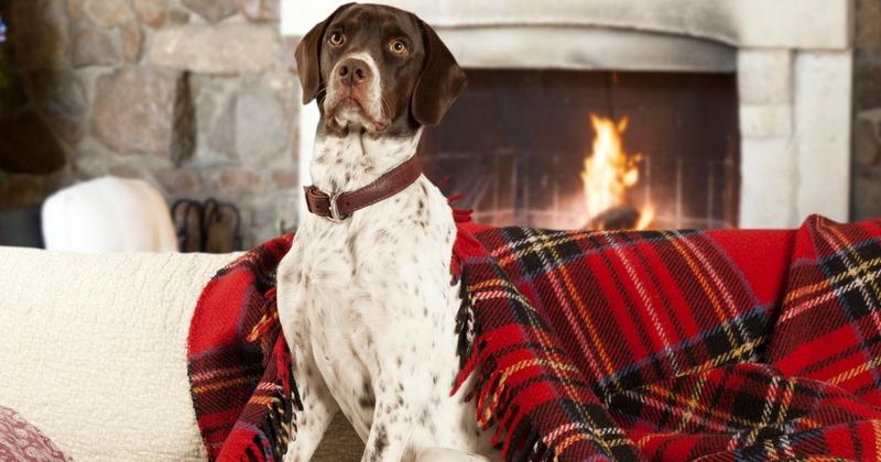 je veux un chien et j 39 habite dans une maison avec jardin quelle race choisir choisir son. Black Bedroom Furniture Sets. Home Design Ideas