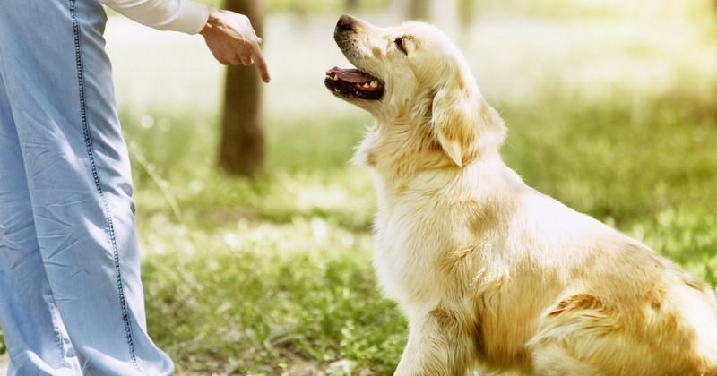 Les 6 erreurs les plus fréquentes dans l'éducation de son chien