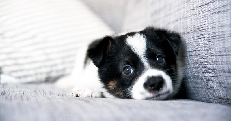 comment faire de mon chiot un g nie eduquer son chien wamiz. Black Bedroom Furniture Sets. Home Design Ideas