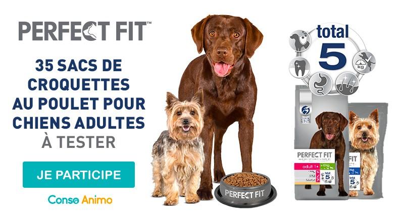 Testez les croquettes Perfect Fit pour votre chien adulte !