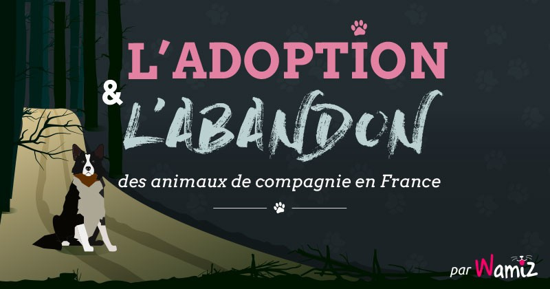 enqu te l 39 abandon et l 39 adoption des animaux de compagnie en france infographie soci t wamiz. Black Bedroom Furniture Sets. Home Design Ideas
