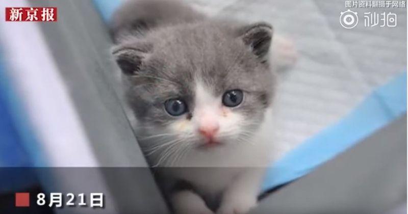 Voici Garlic, le premier chat domestique cloné en Chine !
