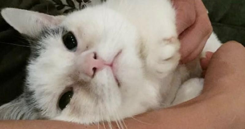 Une chatte aveugle et couverte d'urine a reçu 3000 demandes d'adoption
