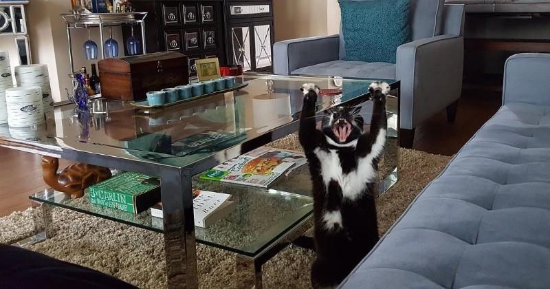 Oui, ce chat a VRAIMENT un incroyable talent !