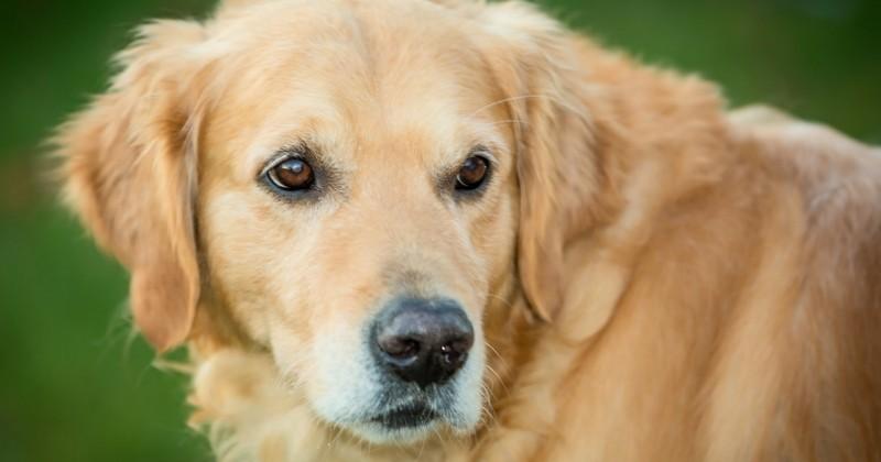 Handicapé, un ancien militaire embauché dans un magasin… avec son chien!