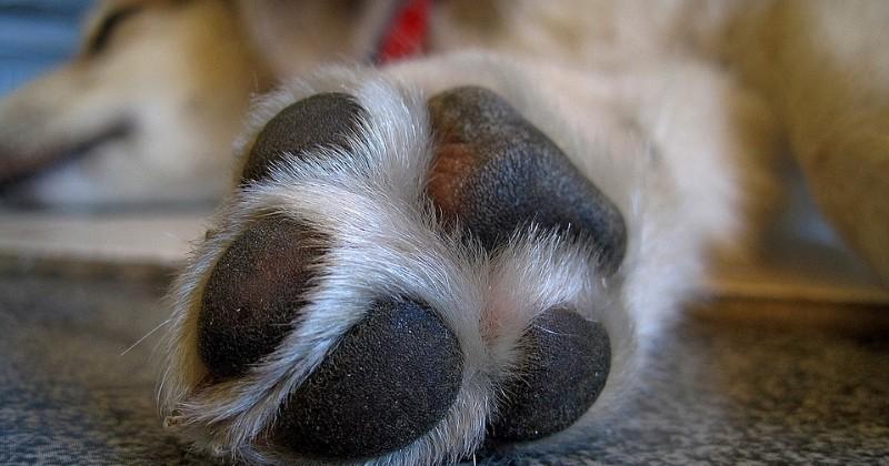 Besoin d aide pour couper les griffes de votre chat un v t rinaire vous conseille - Couper les griffes d un chiot ...