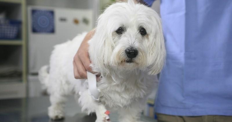 Grippe aviaire : y a-t-il un risque de contamination pour les chiens et chats ?