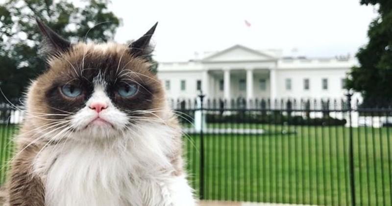 Après avoir conquis Internet, Grumpy Cat part à l'assaut de la Maison Blanche