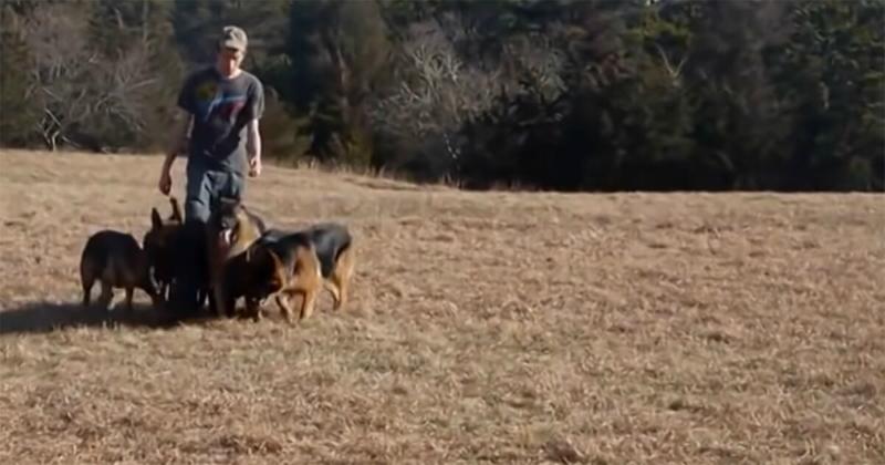 Il impressionne tout le monde en promenant 5 chiens sans laisse : mais la vérité ...