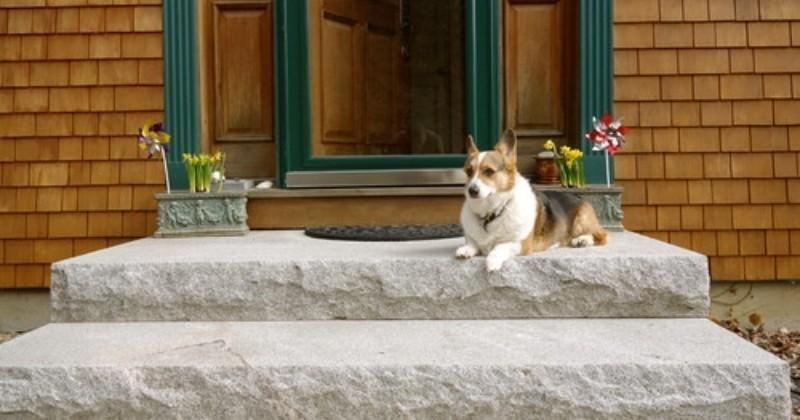 Comment transformer votre jardin en paradis pour chien ?