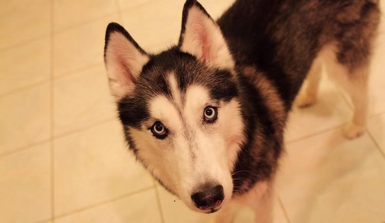 condamn e pour avoir vol et euthanasi le chien de ses voisins cause animale wamiz. Black Bedroom Furniture Sets. Home Design Ideas