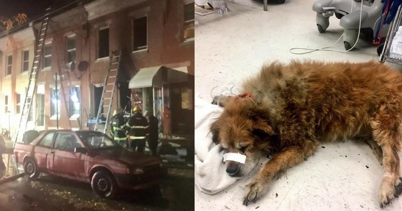 Pendant un incendie, un chien s'allonge sur sa maîtresse pour la protéger du feu
