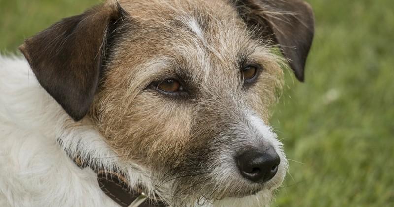Horrifiant: un chien assassiné par balle à quelques mètres de chez lui