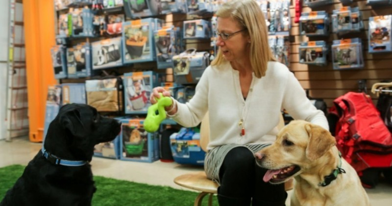 Kurgo, l'entreprise innovante qui a pris le parti de faire cohabiter ensemble chiens et employés