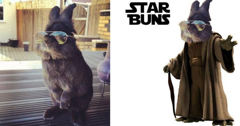 Une photo détournée d'un lapin à lunettes devient virale