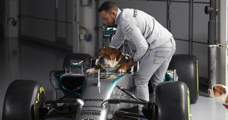 Lewis Hamilton fait congeler le sperme de son chien pour lui assurer une descendance