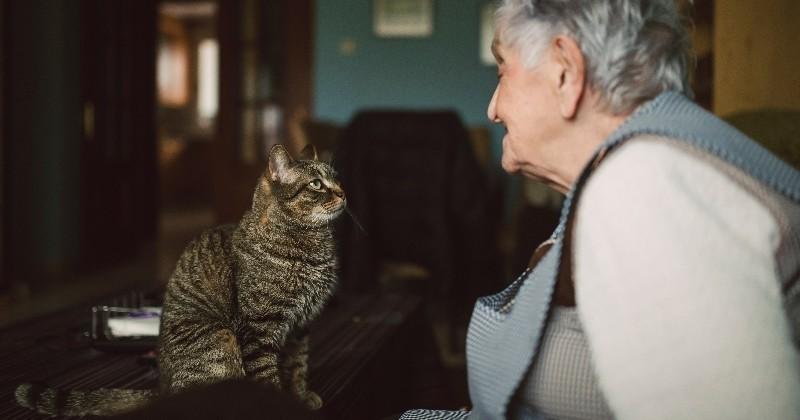 5 rem des de grand m re pour vous d barrasser efficacement des odeurs d urine de chat pratique. Black Bedroom Furniture Sets. Home Design Ideas