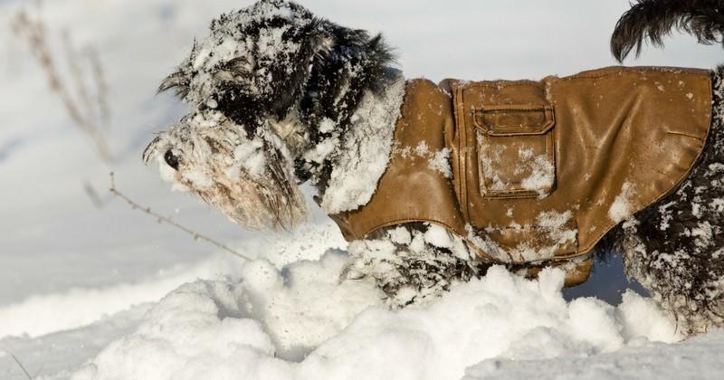 Shopping: les 5 manteaux pour chiens à la mode à vous procurer pour l'hiver!