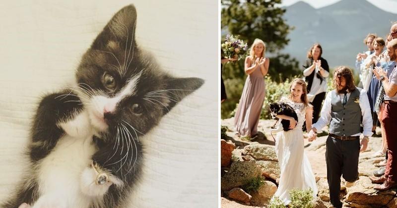 Et si demander la main de sa dulcinée à l'aide d'un chaton ou d'un chiot était la nouvelle tendance ?