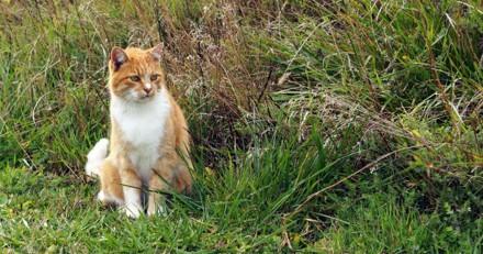 Mystère à Beuvry : des chats disparaissent et reviennent blessés