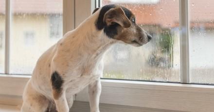 Horrible ! Une chienne torturée avec un tire-bouchon à Aix-en-Provence