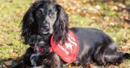 Incroyable ! Ce chien est un détective qui aide à retrouver les chats disparus !