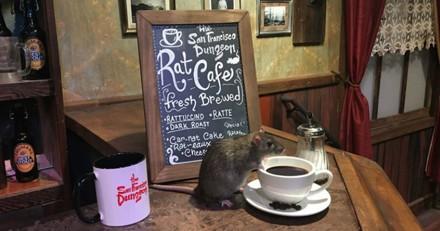 Un bar à rats ouvre ses portes à San Francisco