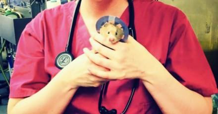 Ce petit hamster avec sa « collerette de la honte » va vous faire totalement craquer
